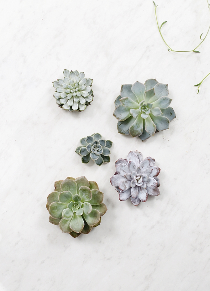 DIY Rootless Succulents @themerrythought