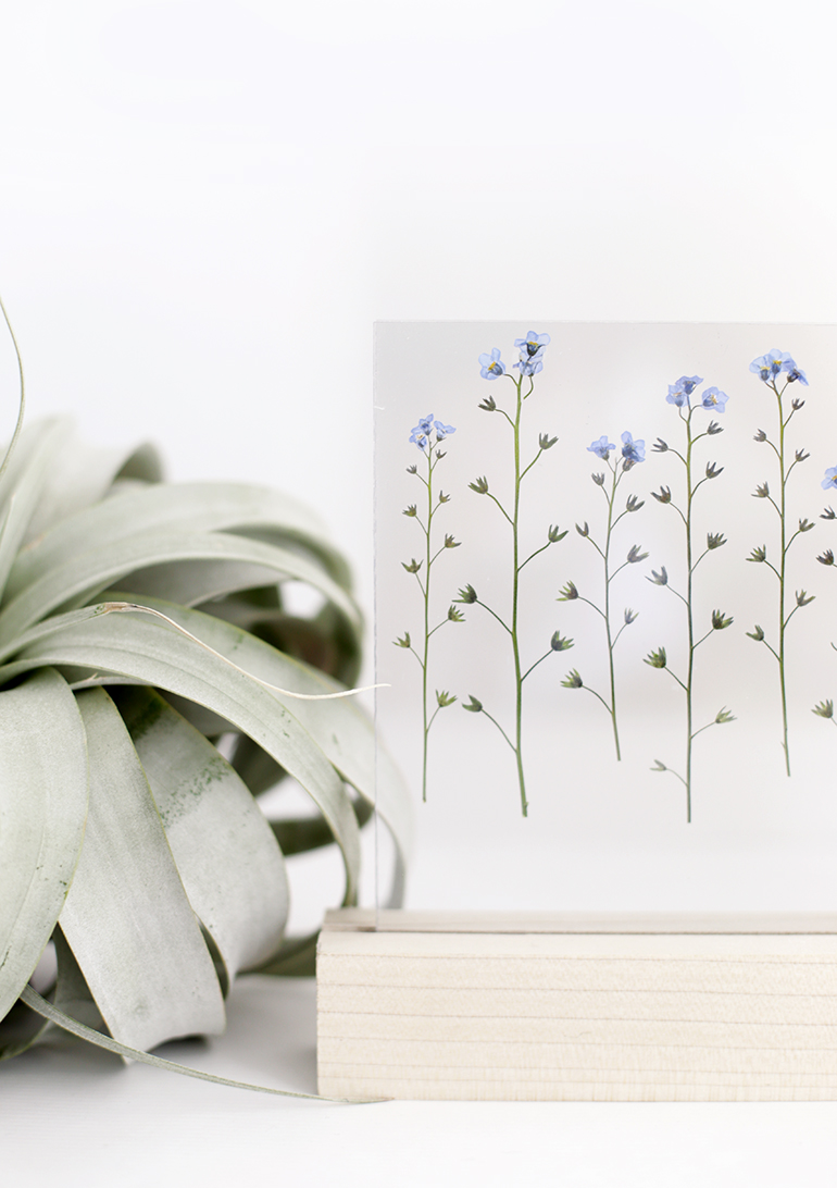 Diy Pressed Flower Display The Merrythought