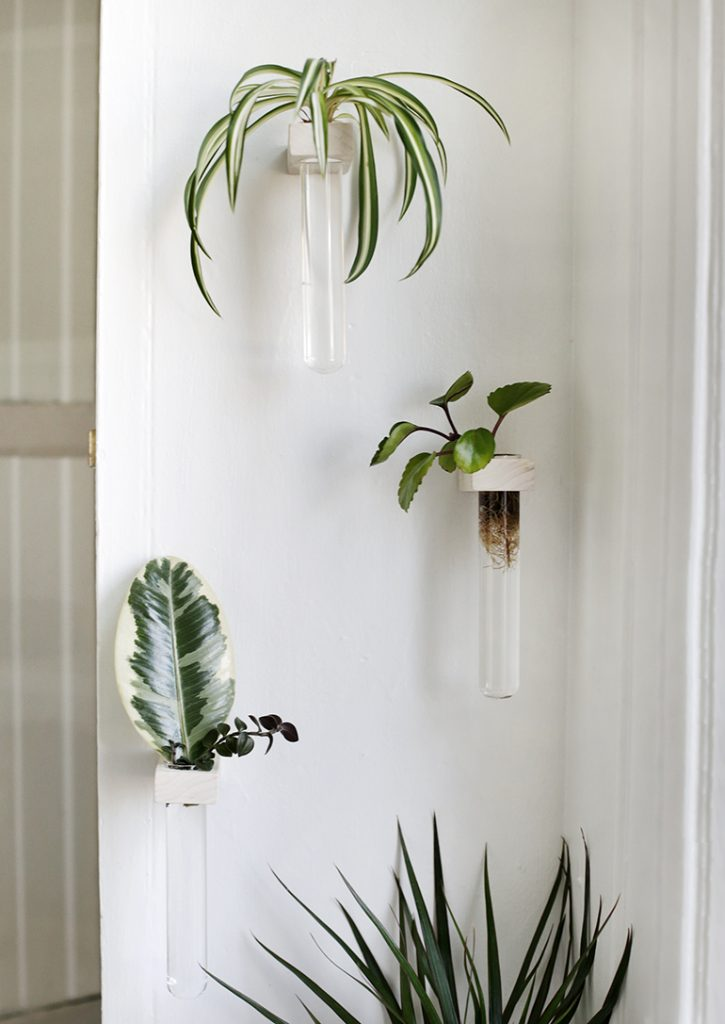 Diy Wall Propagation Tubes The Merrythought