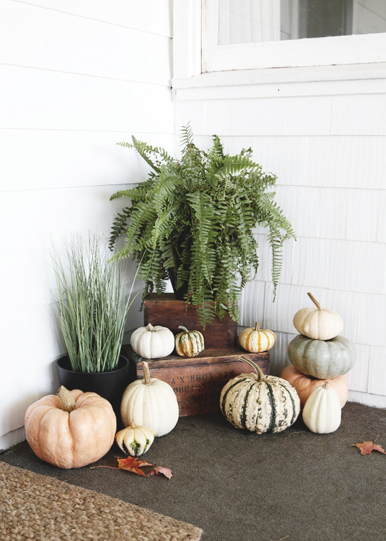 white blue and orange pumpkins with fern