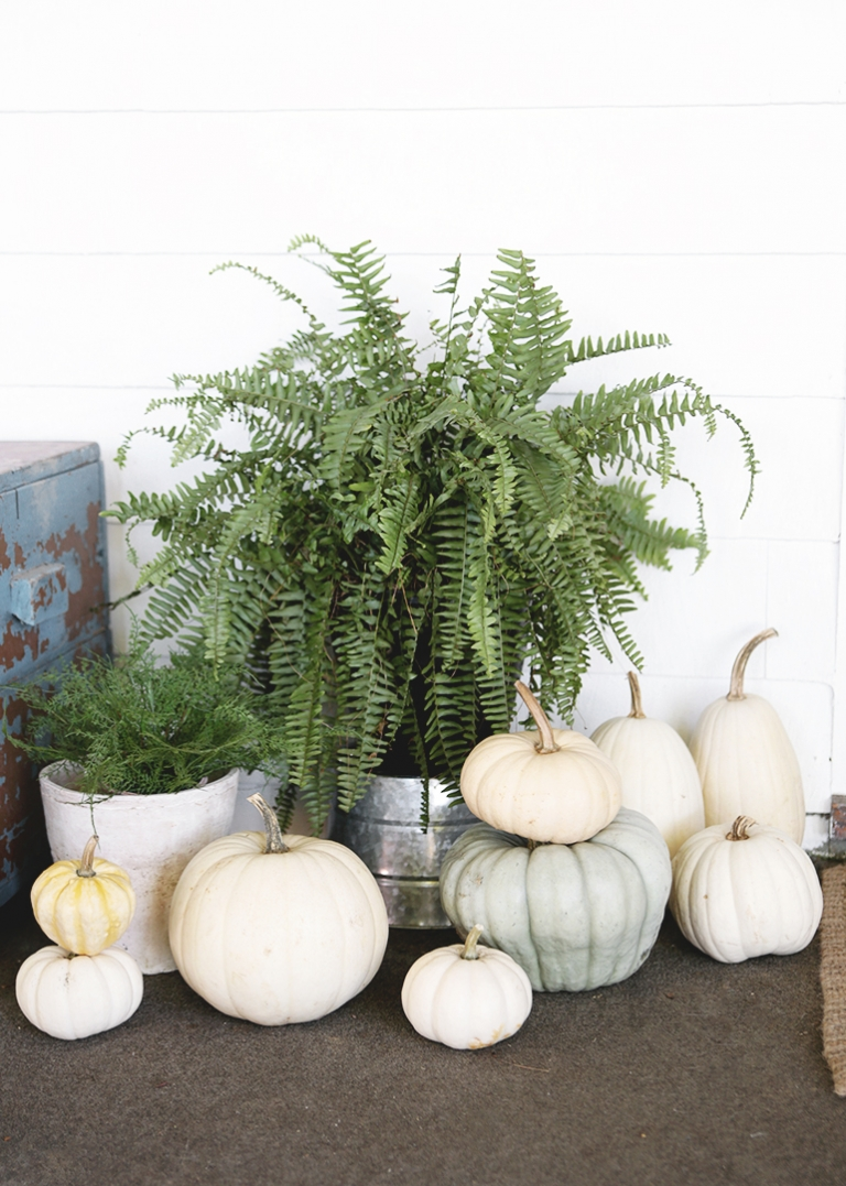 white and blue pumpkins with fern