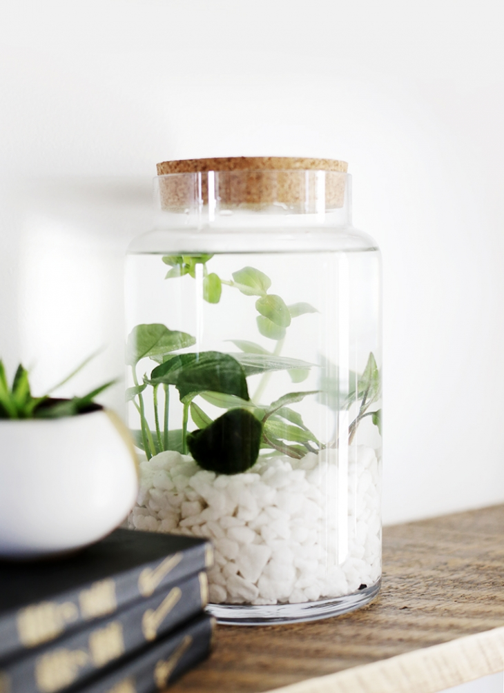 Diy Indoor Water Garden The Merrythought