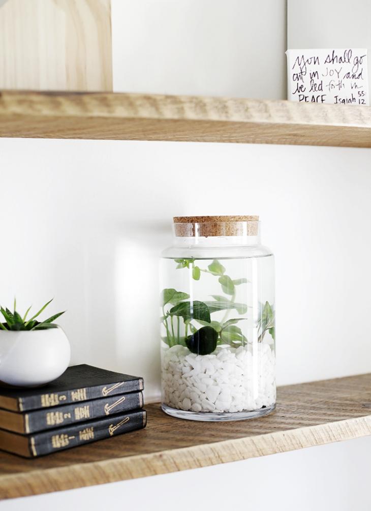 jardins aquatiques d int rieur simples sakarton. Black Bedroom Furniture Sets. Home Design Ideas