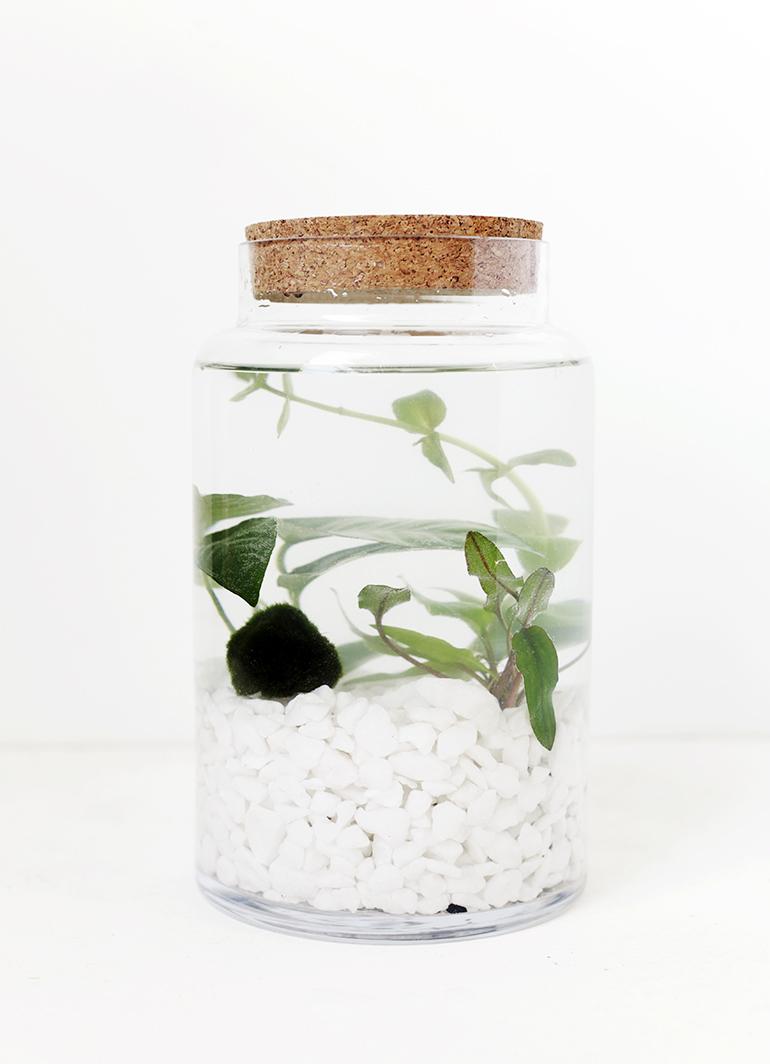 DIY Indoor Water Garden