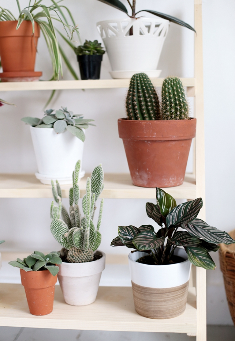 Diy Ladder Plant Stand The Merrythought
