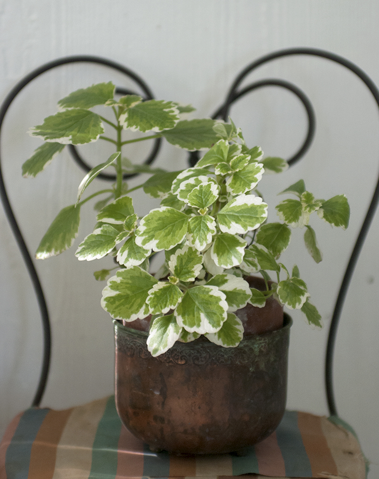5 Easy House Plants The Merrythought