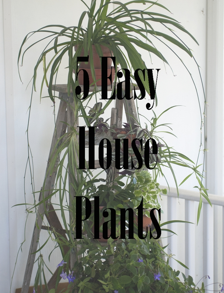 5 Easy House Plants @themerrythought