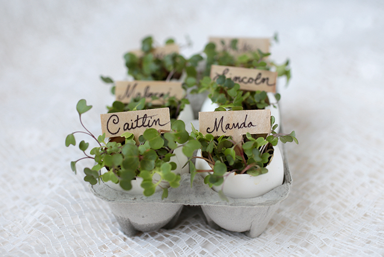 Diy Eggshell Place Card Holders The Merrythought